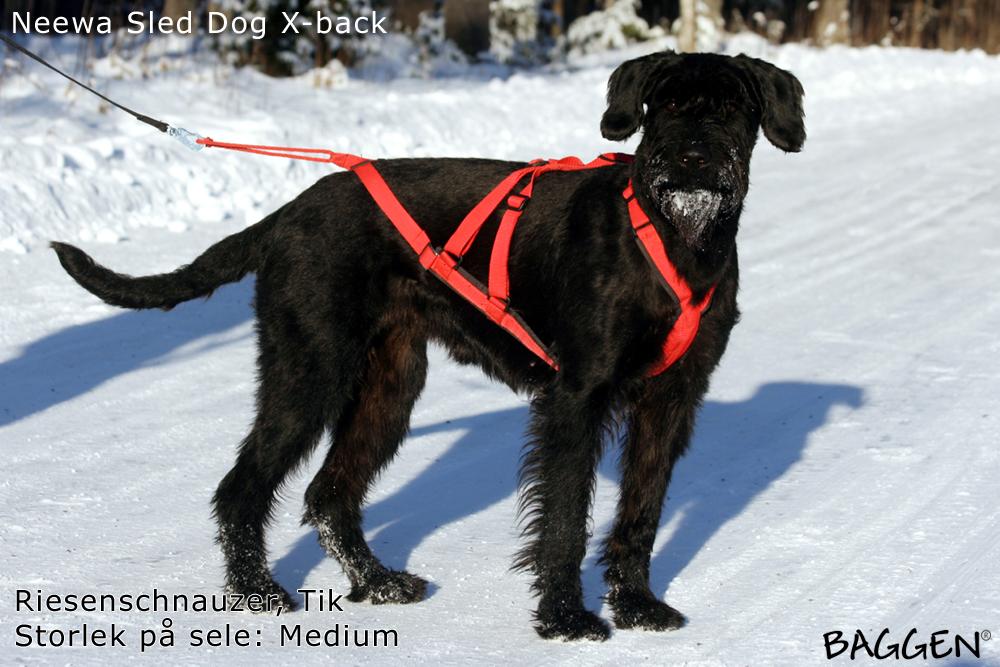 Baggen 174 Neewa Dog Gear Sled Dog Harness